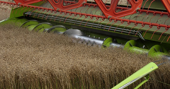 Spring Linseed Harvesting