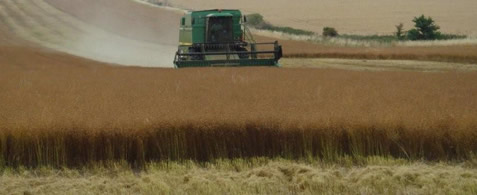 Winter Linseed Harvesting