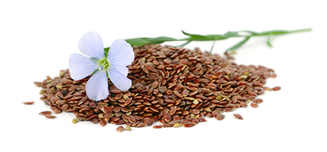 Winter Linseed